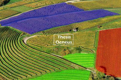 thesis-oeneus